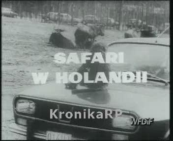 Safari w Holandii