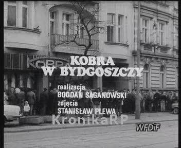 Kobra w Bydgoszczy